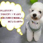うちわ」 (1)