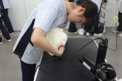 まるこ (2)